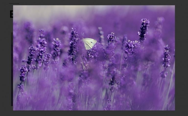 Elementor为图片与视频添加灯箱效果方法